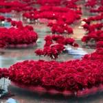 Любопитно за история на розите