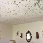 5 съвета за справяне с мухъла у дома