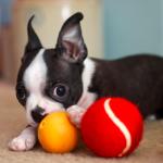 Най-добрите играчки за кучета, които да купите от зоомагазин